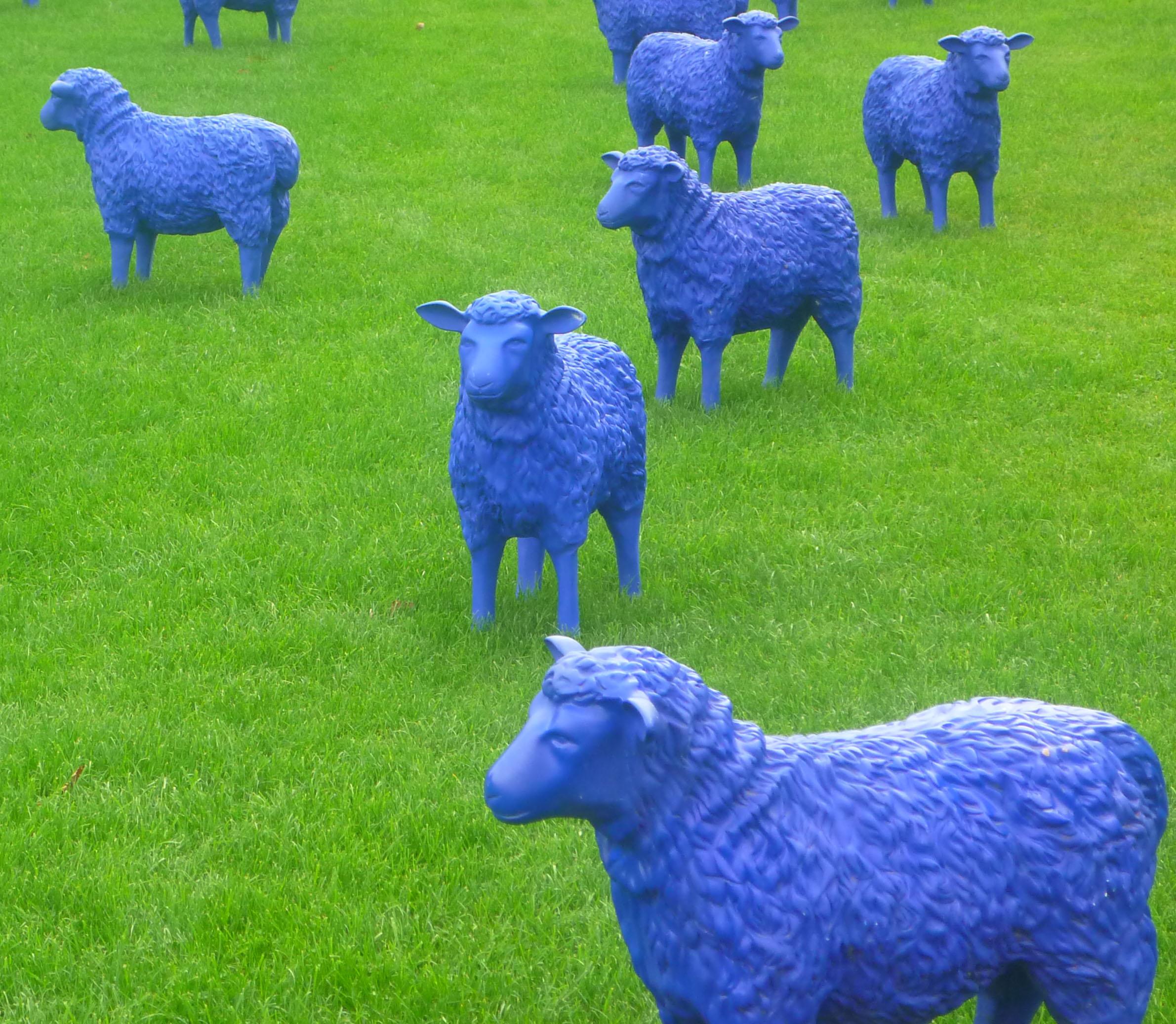 2013-9-22 Ein Schaf, oh ein Schaf