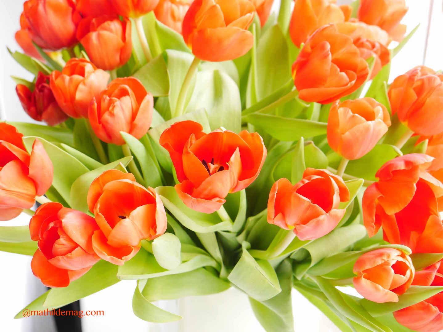 Tulpen in Hamburg